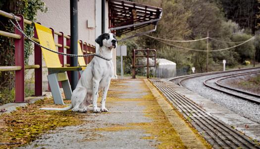 Viajar en AVE con mascotas