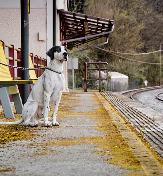 Renfe-mascotas-perro